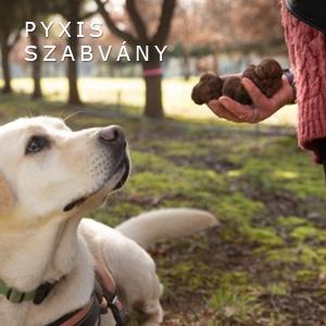 szarvasgombavadász kutya, pyxis truffle, friss szarvasgomba, érett szarvasgomba, szarvasgomba, fekete szarvasgomba, fehér szarvasgomba