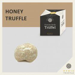 Fresh Honey Truffle (Mattirolomyces terfezioides)