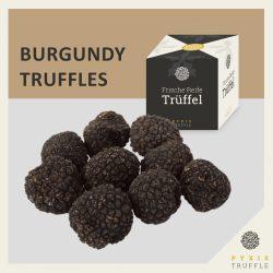 Frische Burgunder-Trüffel (Tuber uncinatum)