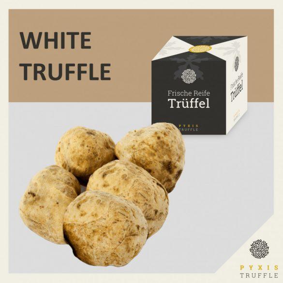 Fresh White Alba Truffles (Tuber magnatum)